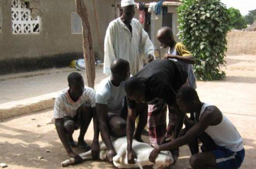 Article : Tabaski à Dakar : tout un cérémonial