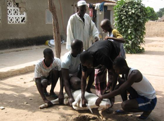 Dakar fête la Tabaski-Dorothy Voorhees