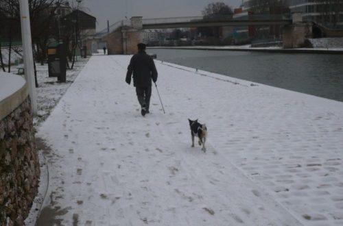 Article : Bal(l)ade d'un homme et d'un chien perdus